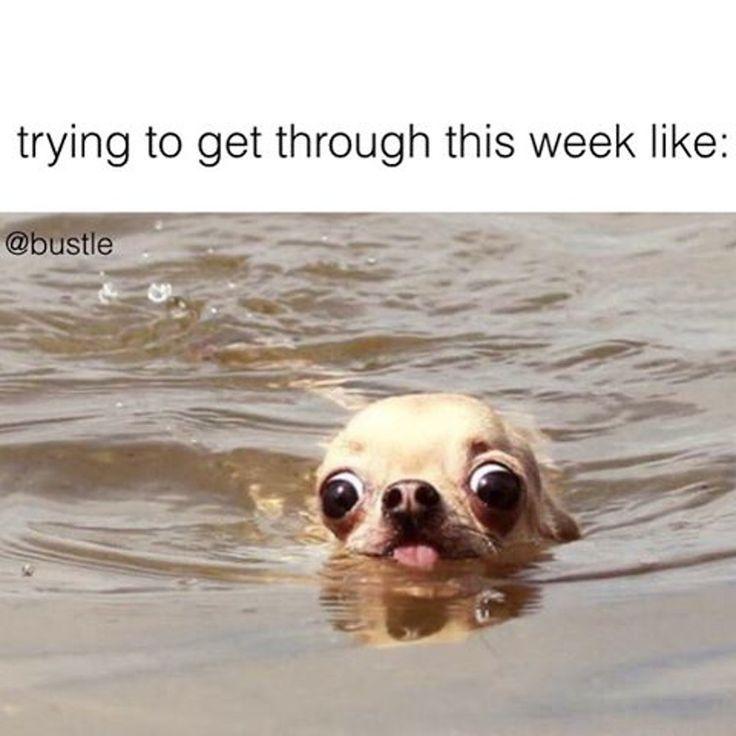 Trying To Get Thru This Week Funny Animal Jokes Animal Jokes Funny Animal Memes