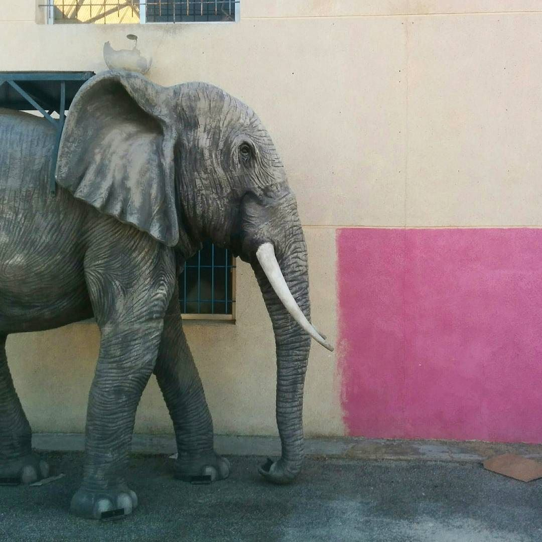 #taller582 #elefante #unafotoaldia