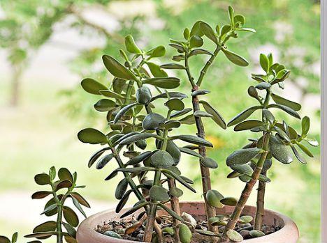 No Green Thumb? 13 Healthy Hard-to-Kill Houseplants | Indoor ...