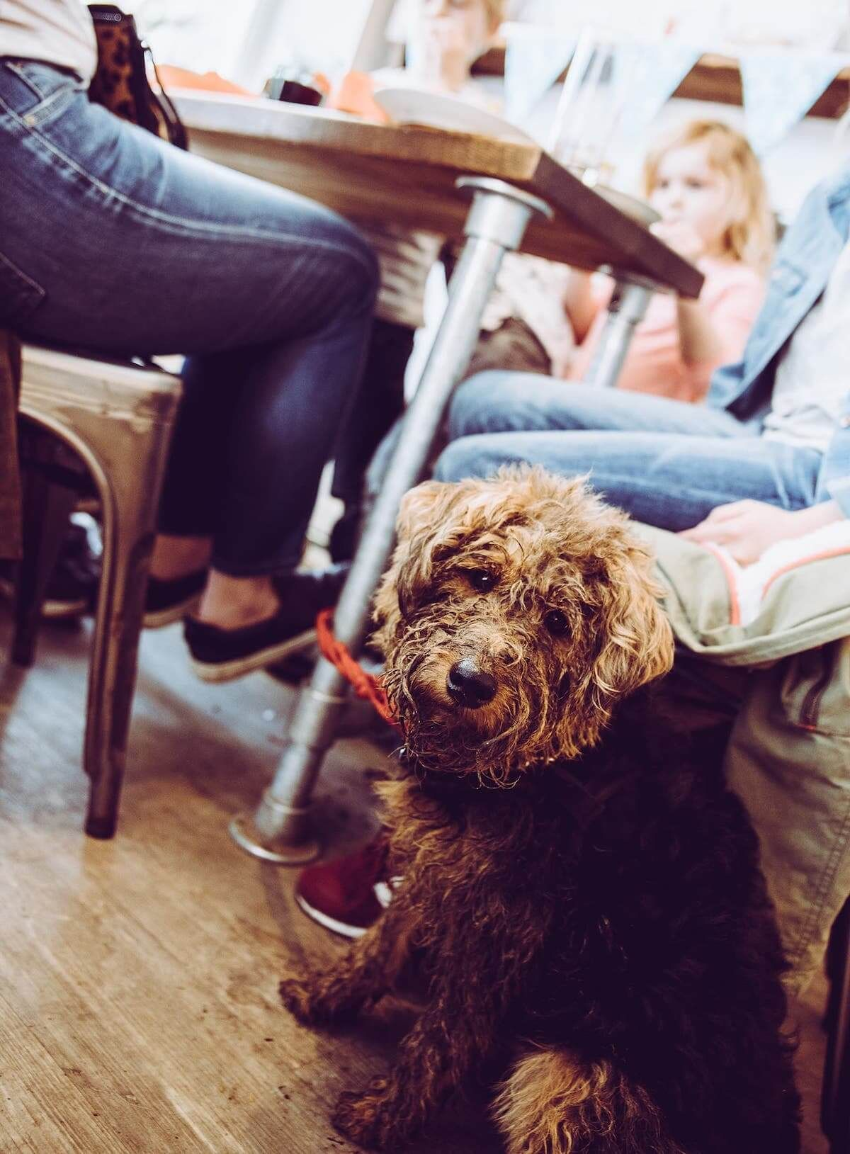 Cuppa Cuddles The Uk S Best Pet Cafes In 2020 Pet Cafe Dog Cafe Dog Friends