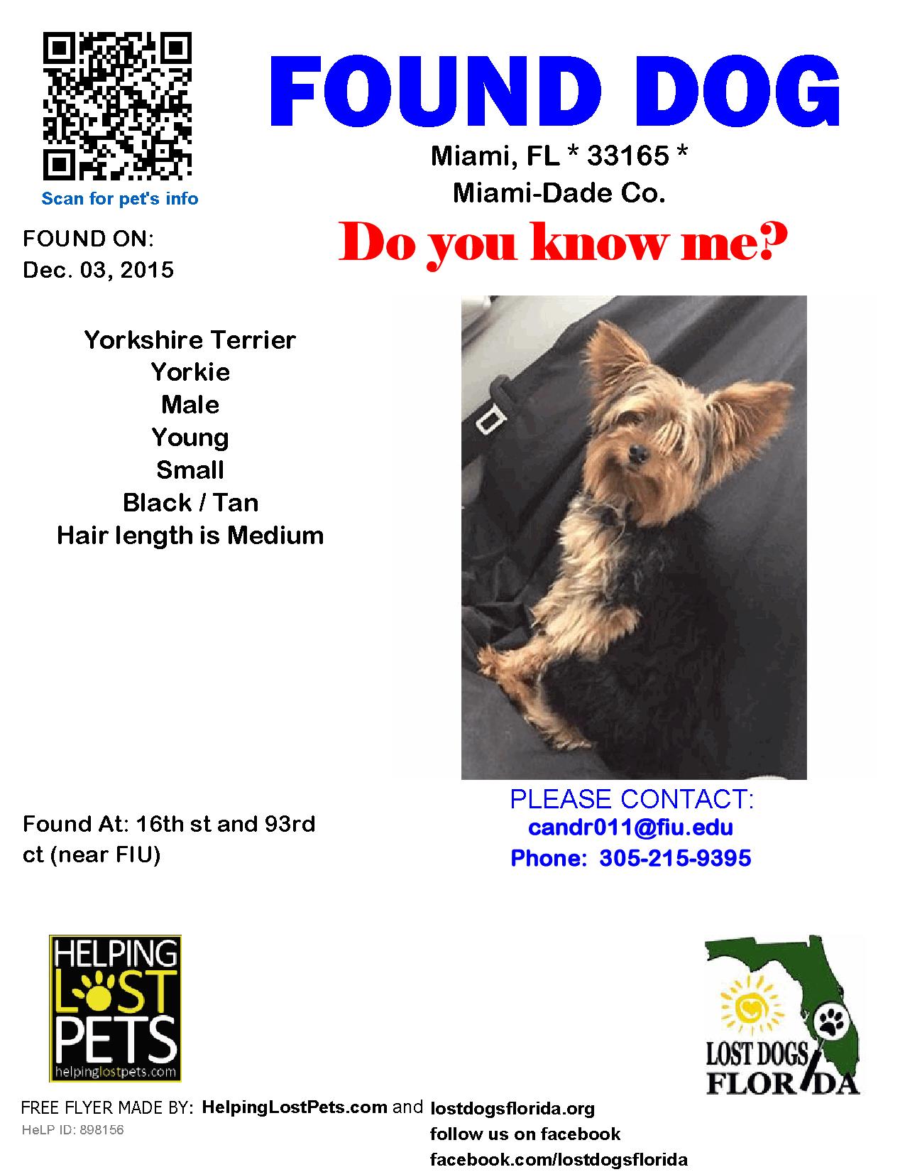 Found Dog - Yorkshire Terrier Yorkie - Miami, FL, United States