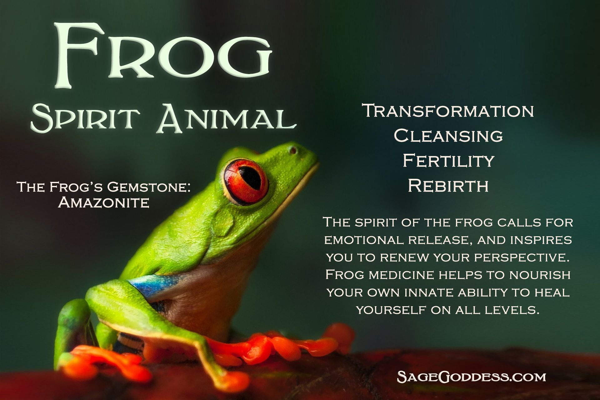 frog spirit guide outside the lines animales de poder animales runas. Black Bedroom Furniture Sets. Home Design Ideas
