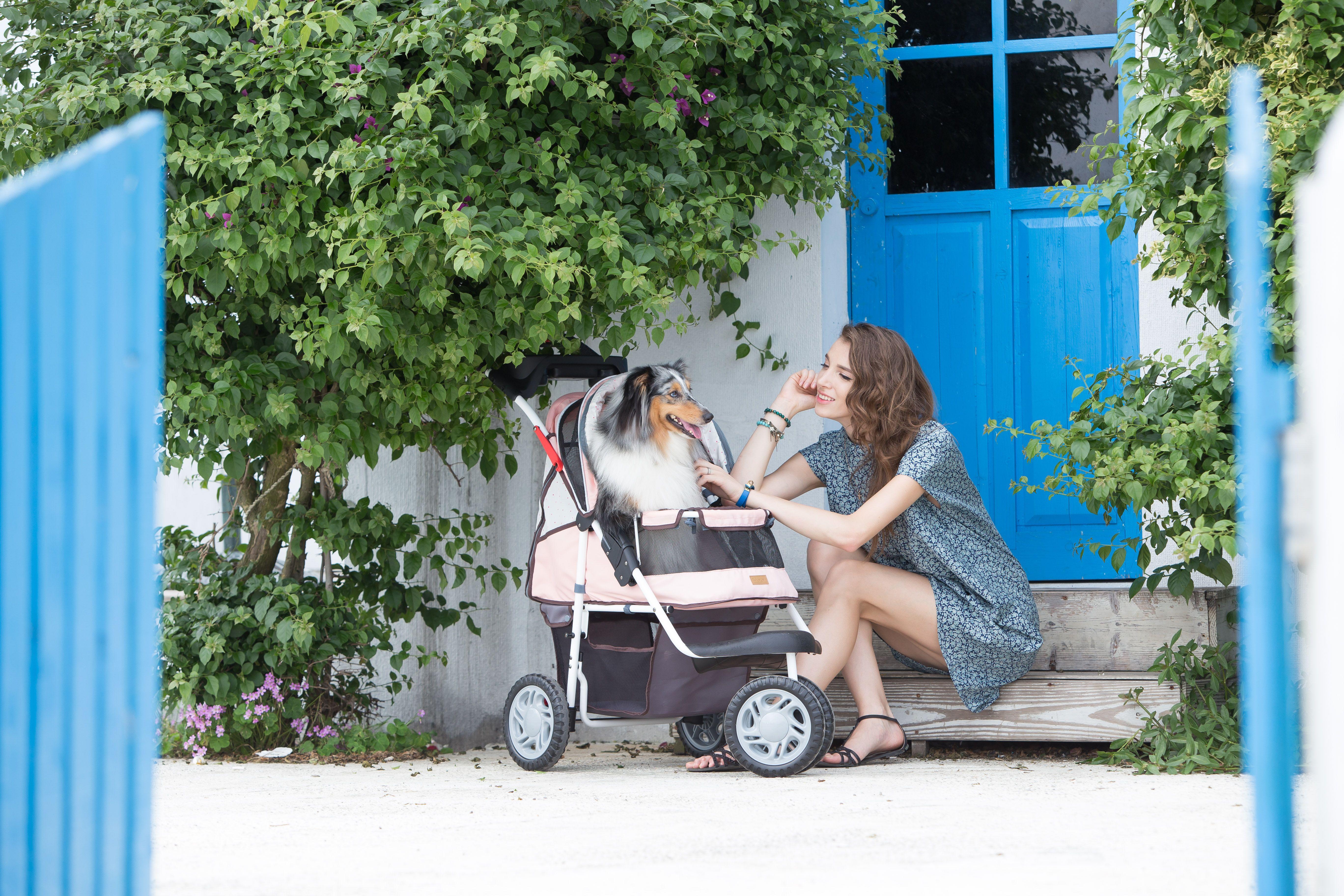 Collie fun time. A day on the beach. Ibiyaya pet stroller
