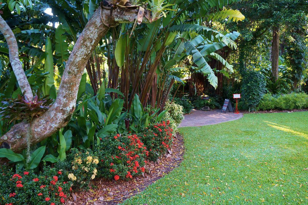 Ixora Under Heliconia Cairns Botanical Garden Dream Backyard Garden Garden Landscaping Family Garden