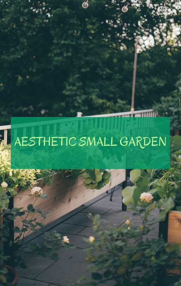 aesthetic small garden