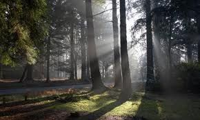 The New Forest, England... oh what I'd give to go for a big walk in the forest today!
