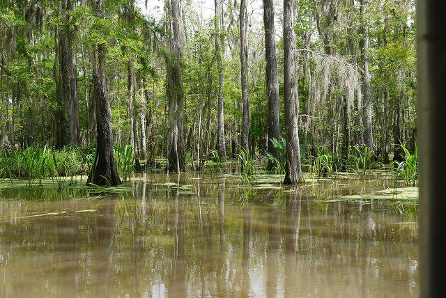 Bayou Scenery | Swamp Scene