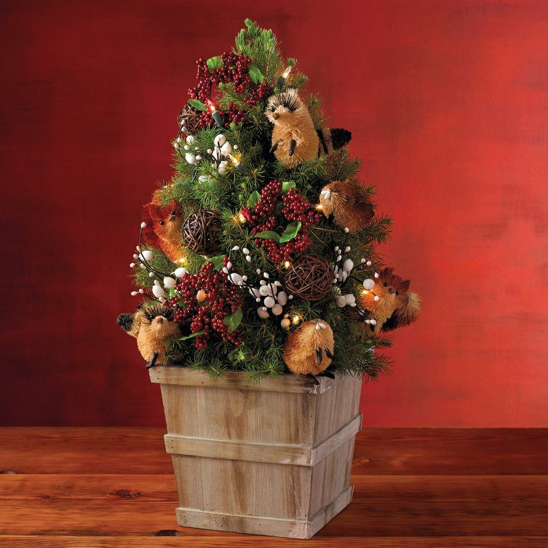 Weihnachtsbaum Im Topf So Halt Die Tanne Langer Weihnachtsbaum Ideen Weihnachtsbaum Traditioneller Weihnachtsbaum