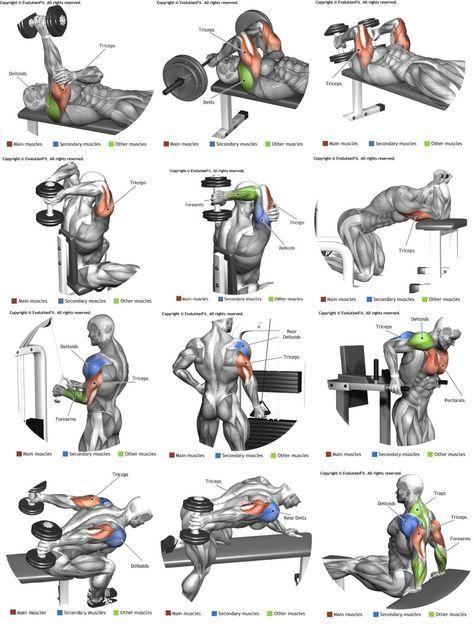 Tren Superior Png 1189 1571 Con Imágenes Ejercicios Musculares Ejercicios Entrenamiento De Tríceps