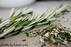 Harvesting rosemary, also links on planting, and watering rosemary