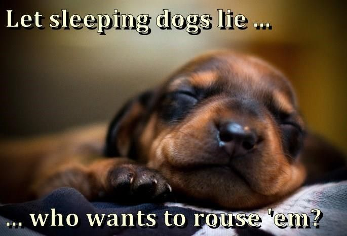 Let Sleeping Dogs Lie Who Wants To Rouse Em Sleeping