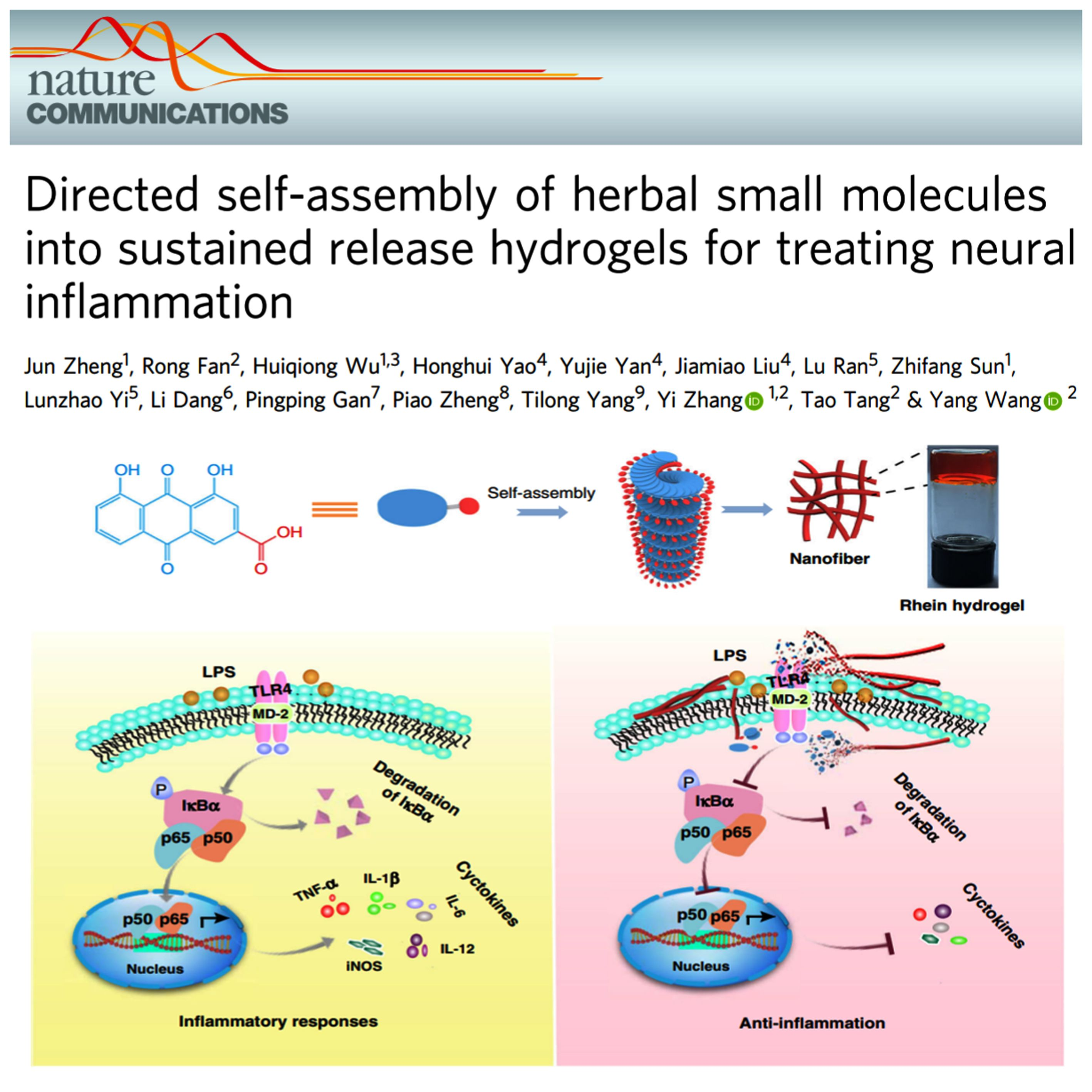Directed Self-assembly Of Herbal Small Molecules Into