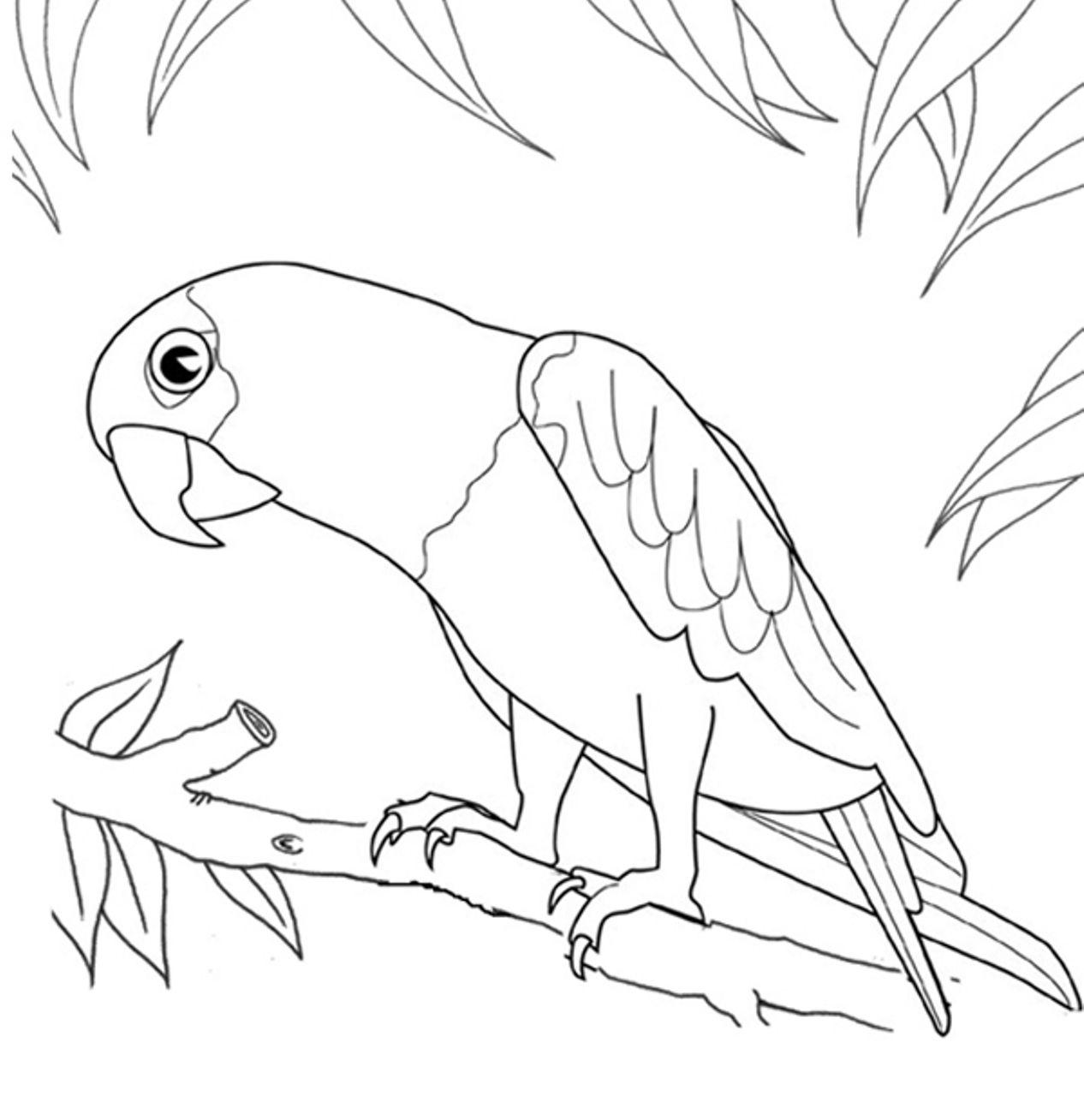 Bird Coloring Pages Cat Coloring Page Parrots Art [ 1308 x 1266 Pixel ]