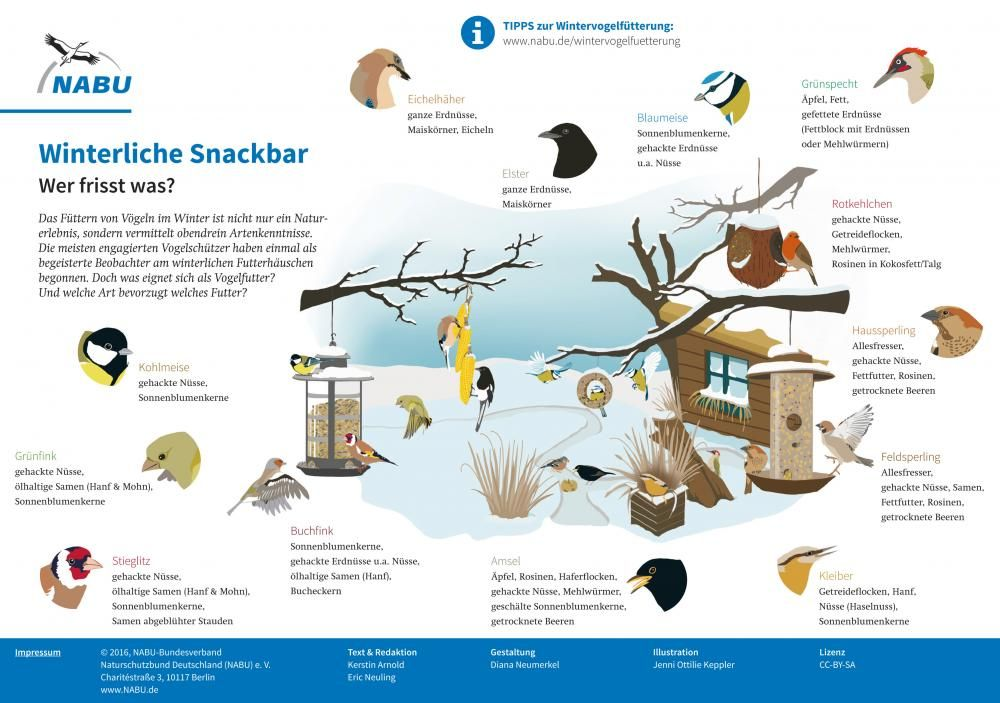Experte Rat Vogel Im Garten Ganzjahrig Futtern Vogel Im Garten Vogel Im Winter Winter