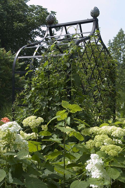 Rosenlaube mit Kletterpflanze