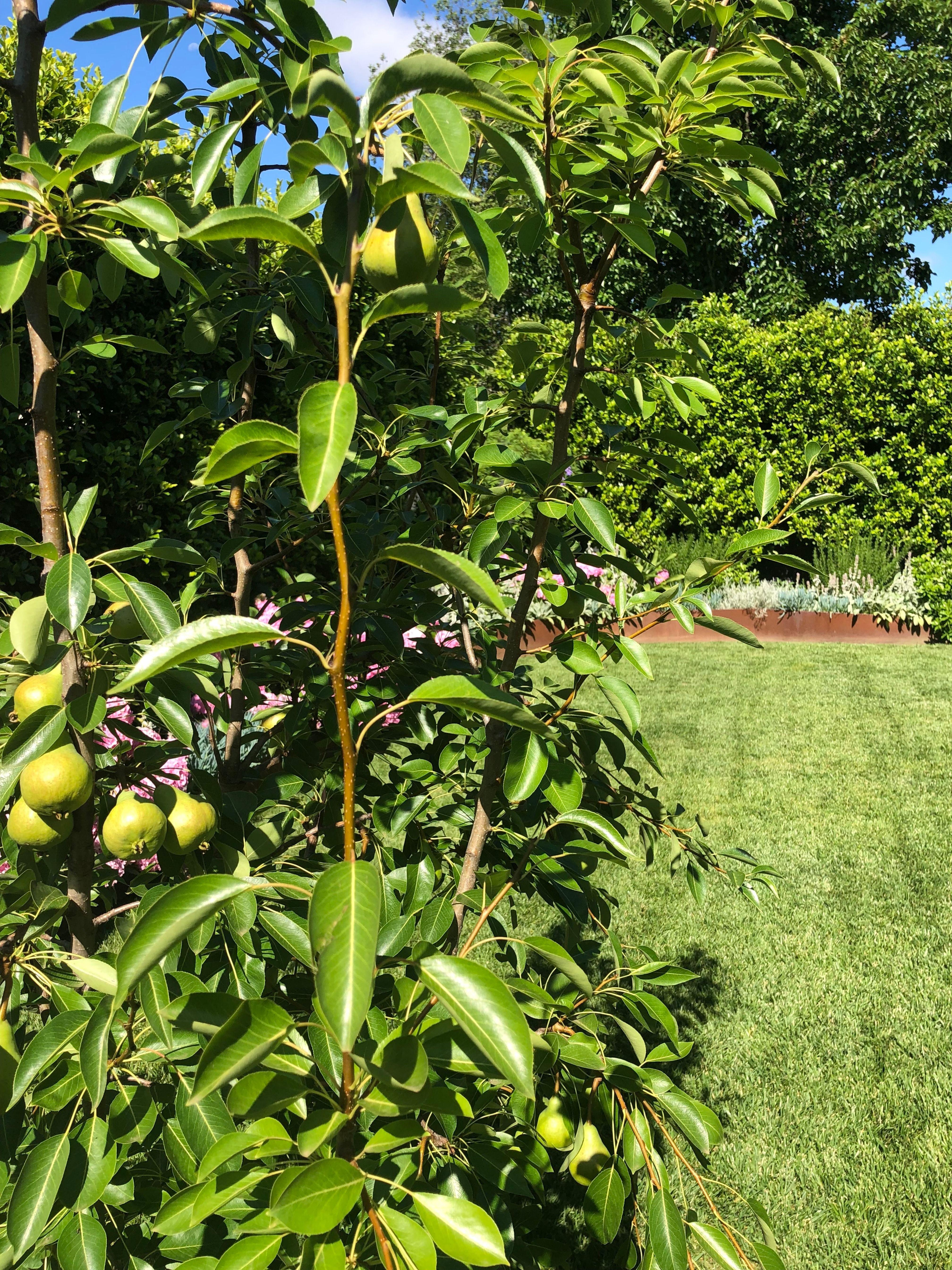 Fruit Trees To Private Front Garden Source Ginkgoparadise Com Au Paradise Landscape Landscape Materials Front Garden
