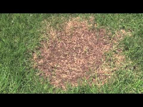 This Video Explains Lawn Renewal And Renovation Lawn Renovation Lawn Restoration Seeding Lawn