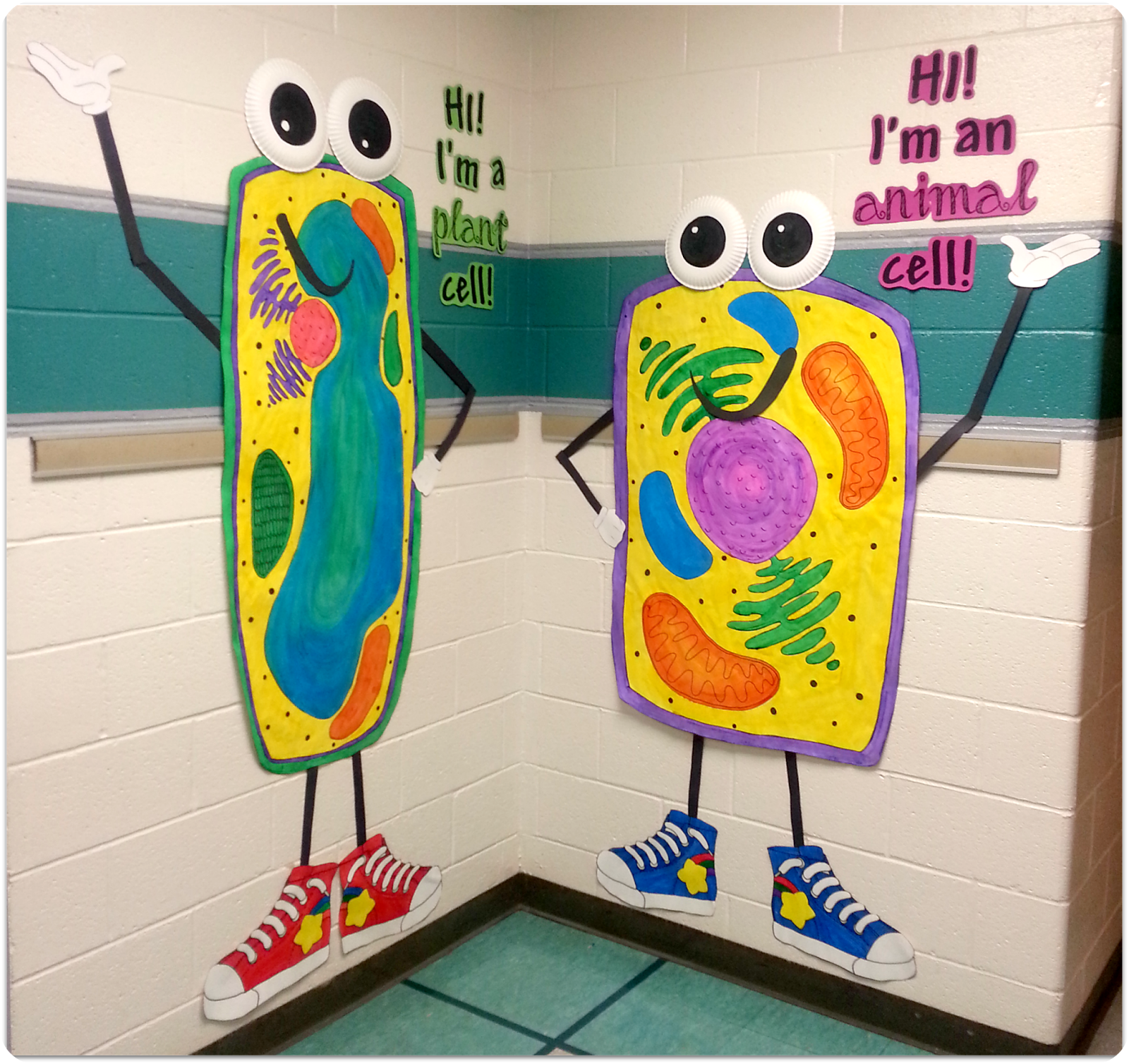Animal Cell 3d Project Poster