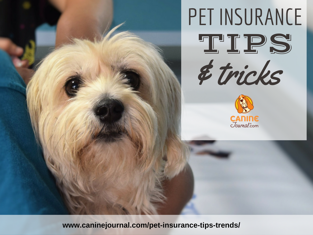 Is Pet Insurance Worth It Comprehensive Guide Pet Health