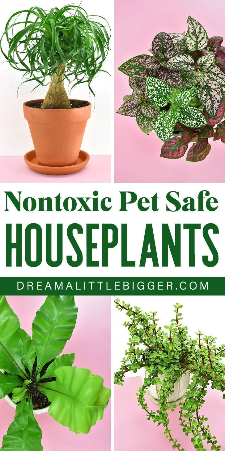 Nontoxic Houseplants Safe for Cats and Dogs in 2020 ...