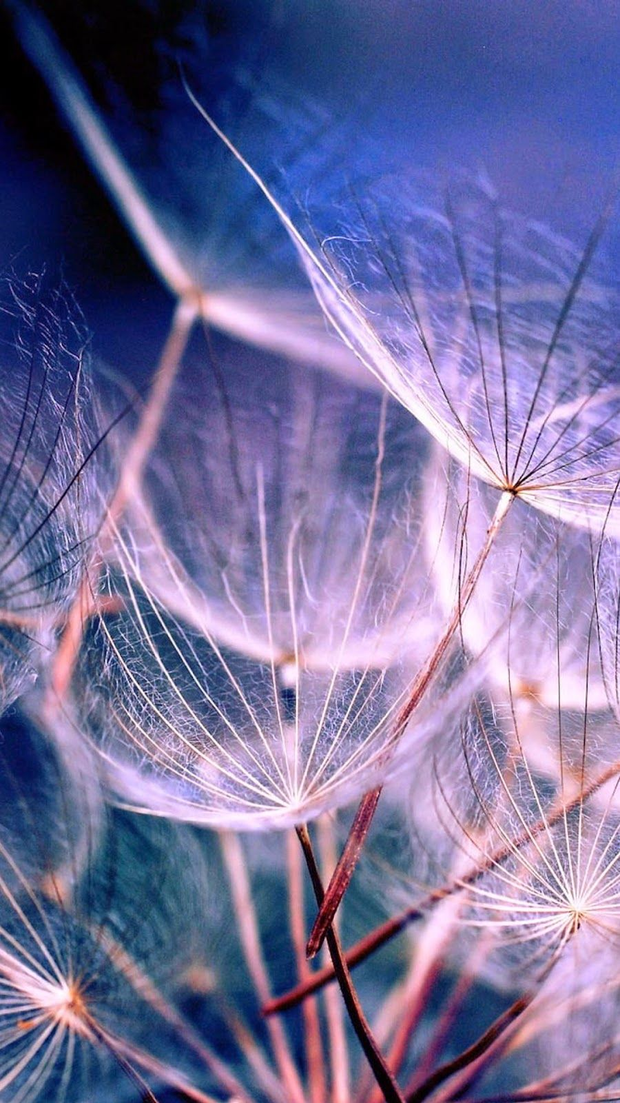 25 Hd Retina Wallpaper Collection Of Iphone 6 Plus Hdpixels Retina Wallpaper Dandelion Nature Wallpaper