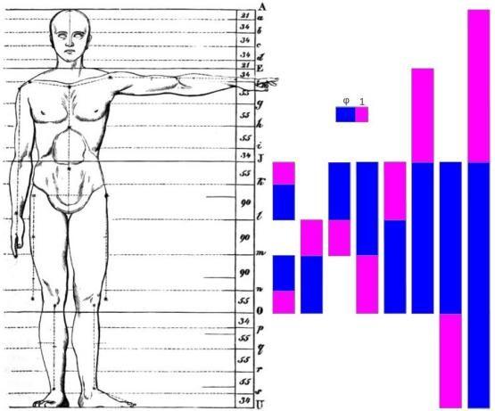 Sacred Geometry - Golden Ratio based human body proportions