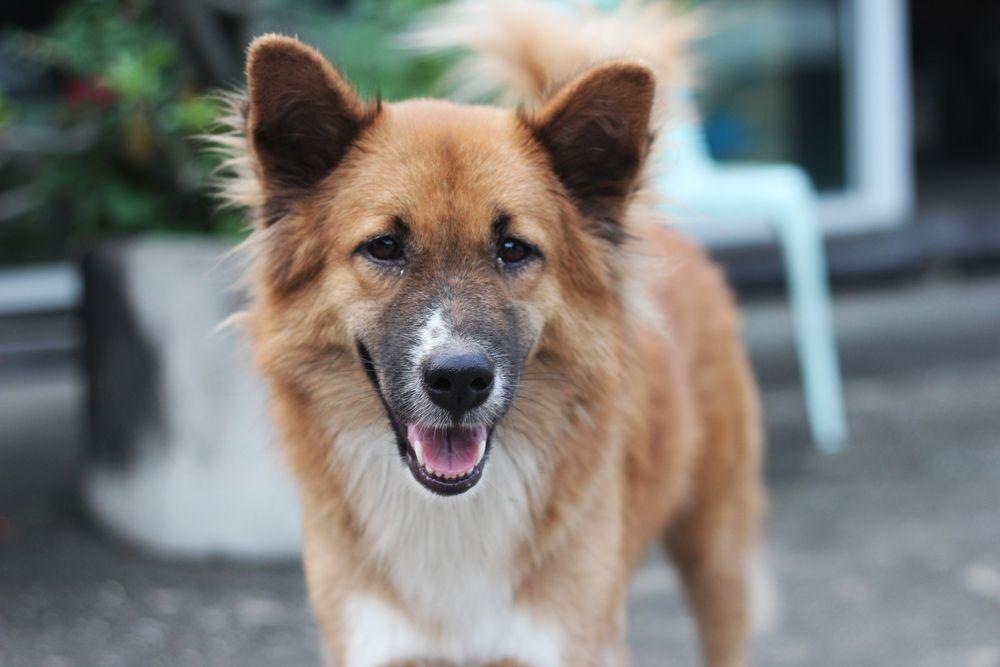 Pomeagle | Dog breeds, Lucky puppy, Dogs