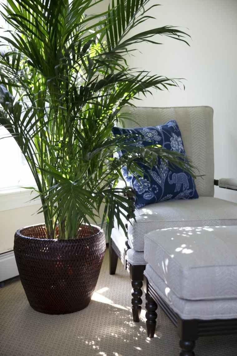design int rieur chambre coucher plante palme lit id es. Black Bedroom Furniture Sets. Home Design Ideas