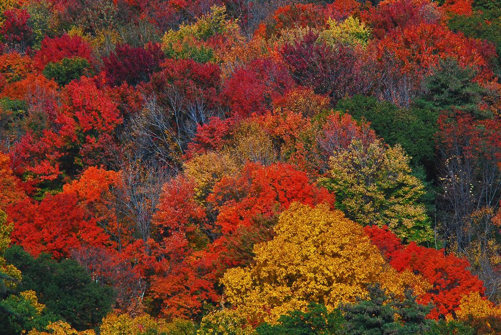 Inspiration Of The Dance Of Fall New England Fall Leaves Changing Color Fall Camping