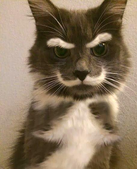 Chat Furieux un chat furieux !! sourcils froncés et moustache dressée | amours de