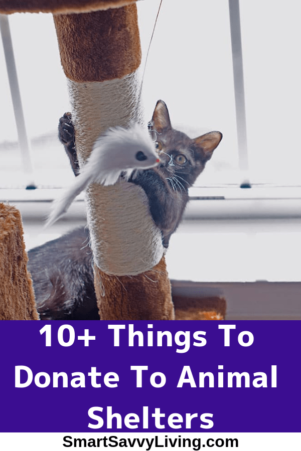 10 Things To Donate To Animal Shelters There Are Lots Of Items Animal Shelters Can Use Some You Probably Al Animal Shelter Best Pet Insurance Cute Cat Gif