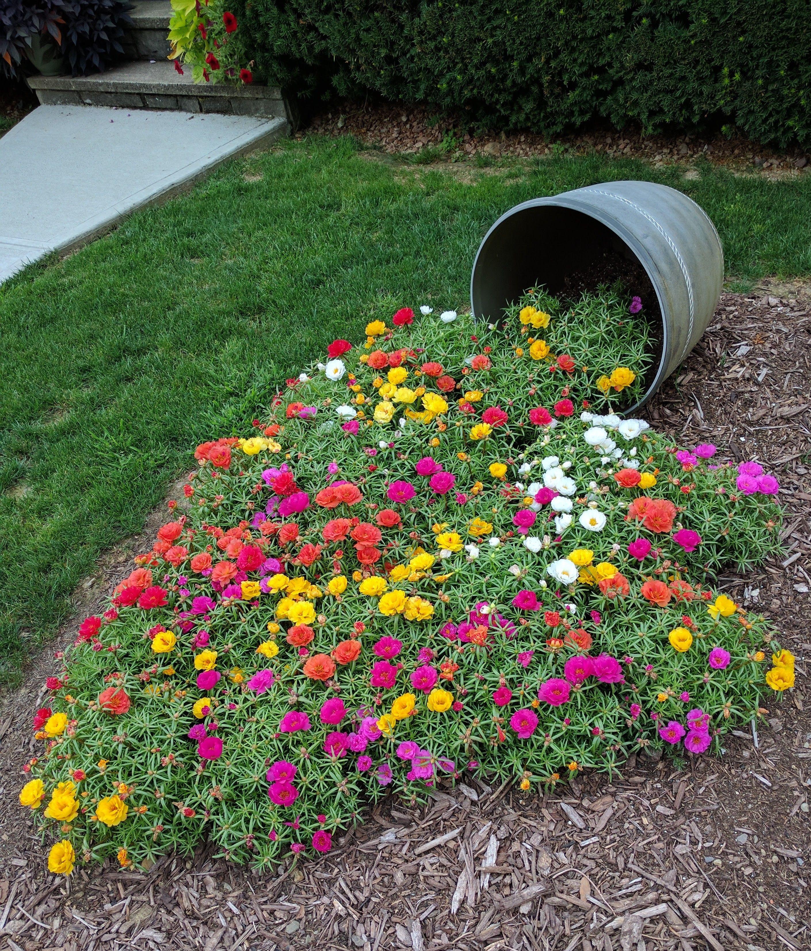 Portulaca Garden Design Garden Landscaping Container Gardening