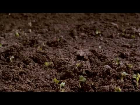 Dirt - the movie of the soil