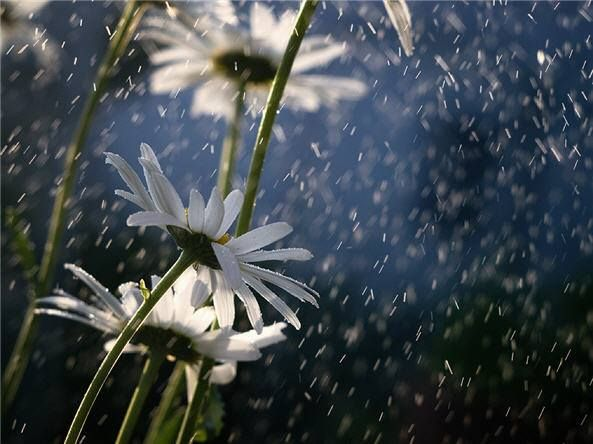 Knowing The Difference Between Right And Wrong Is One Thing Showing It In Your Actions Is Another Sh With Images Dancing In The Rain What A Beautiful World Wild Flowers
