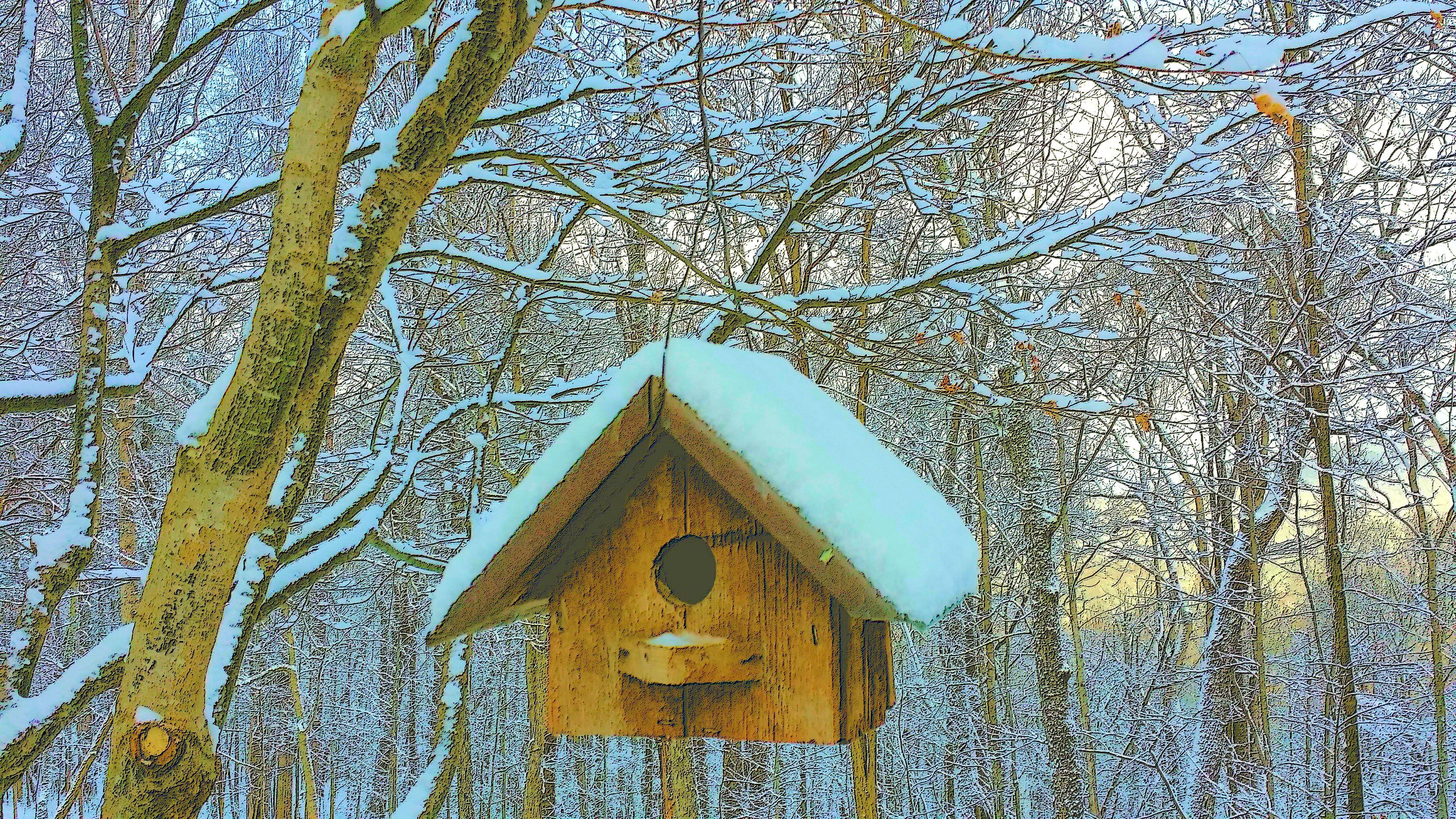 Snow covered birdhouse (Jan 2016).