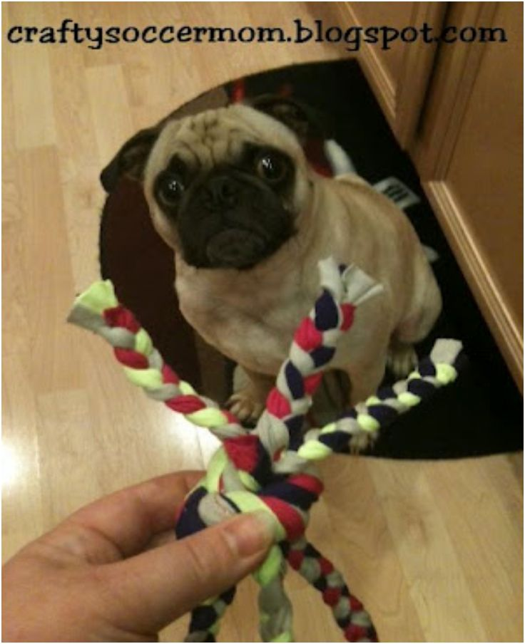 Top 10 Diy Toys For Feisty Dogs Diy Dog Toys Dog Toys Toy Puppies