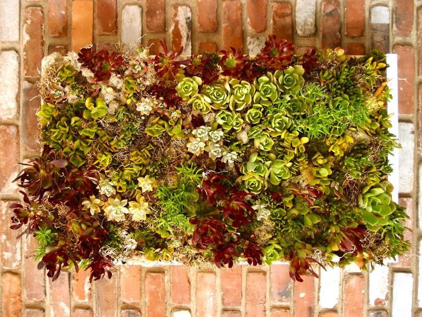 Let\'s Craft: How to Make a Succulent Wall using a shallow box ...
