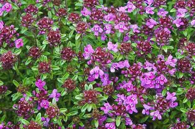 Top 10 Colorful Ground Cover Plants for Your Garden