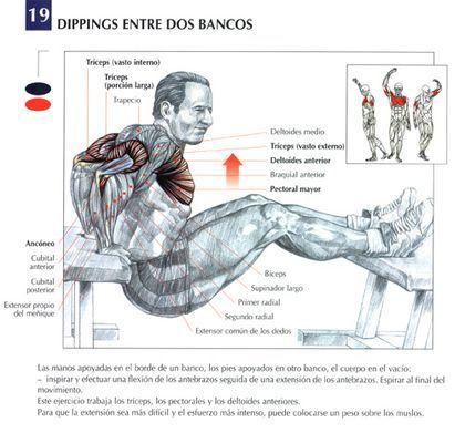 ejercicios biceps y triceps sin pesas