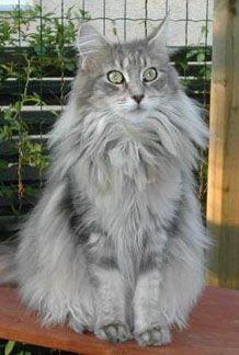 Pin Em Cats I Love