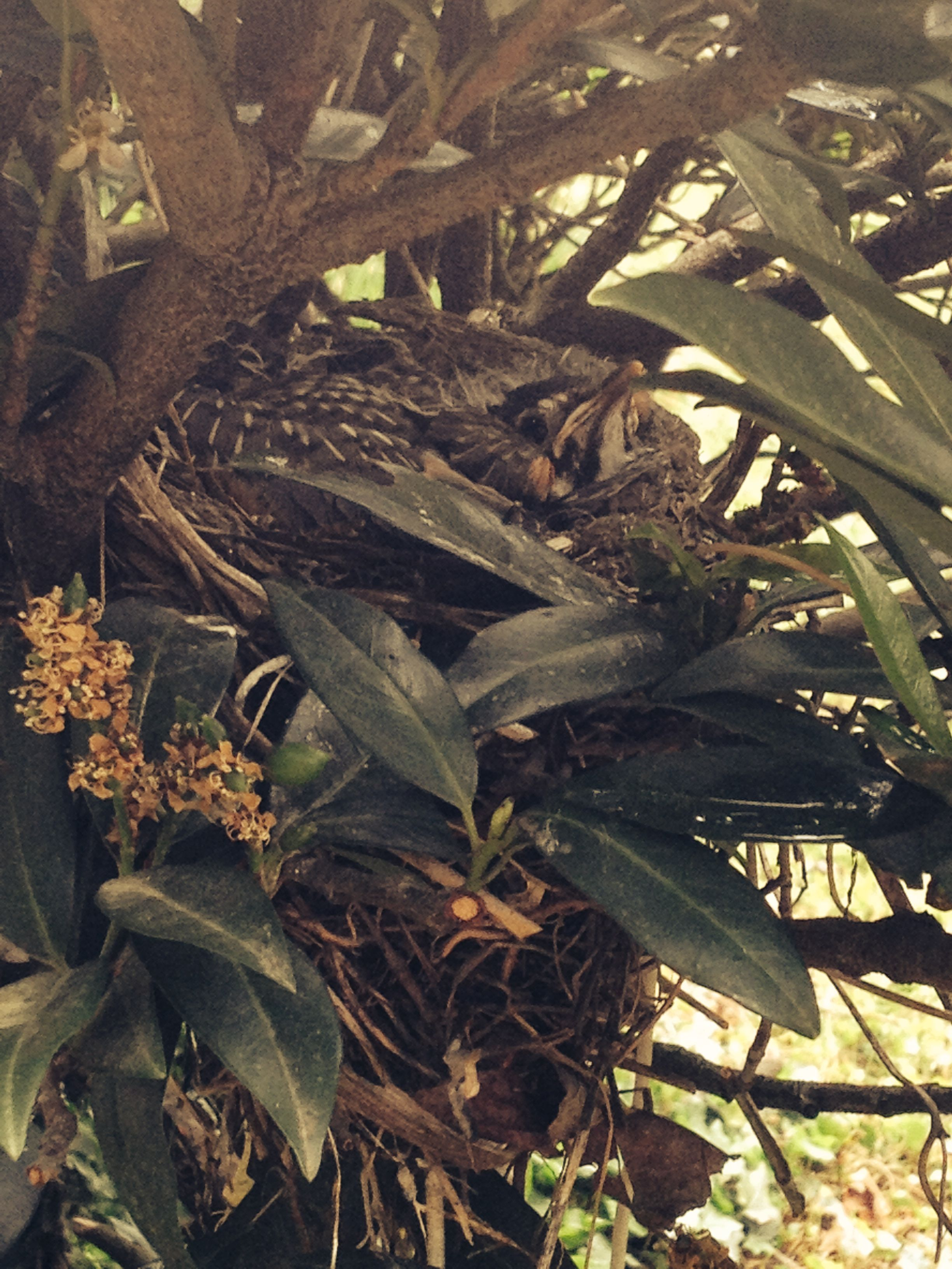 Two Rounds Of Birds With Babies In The Same Shrub