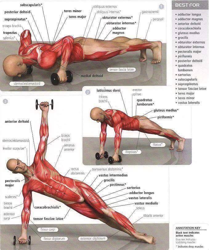 deltoid zsírégetés