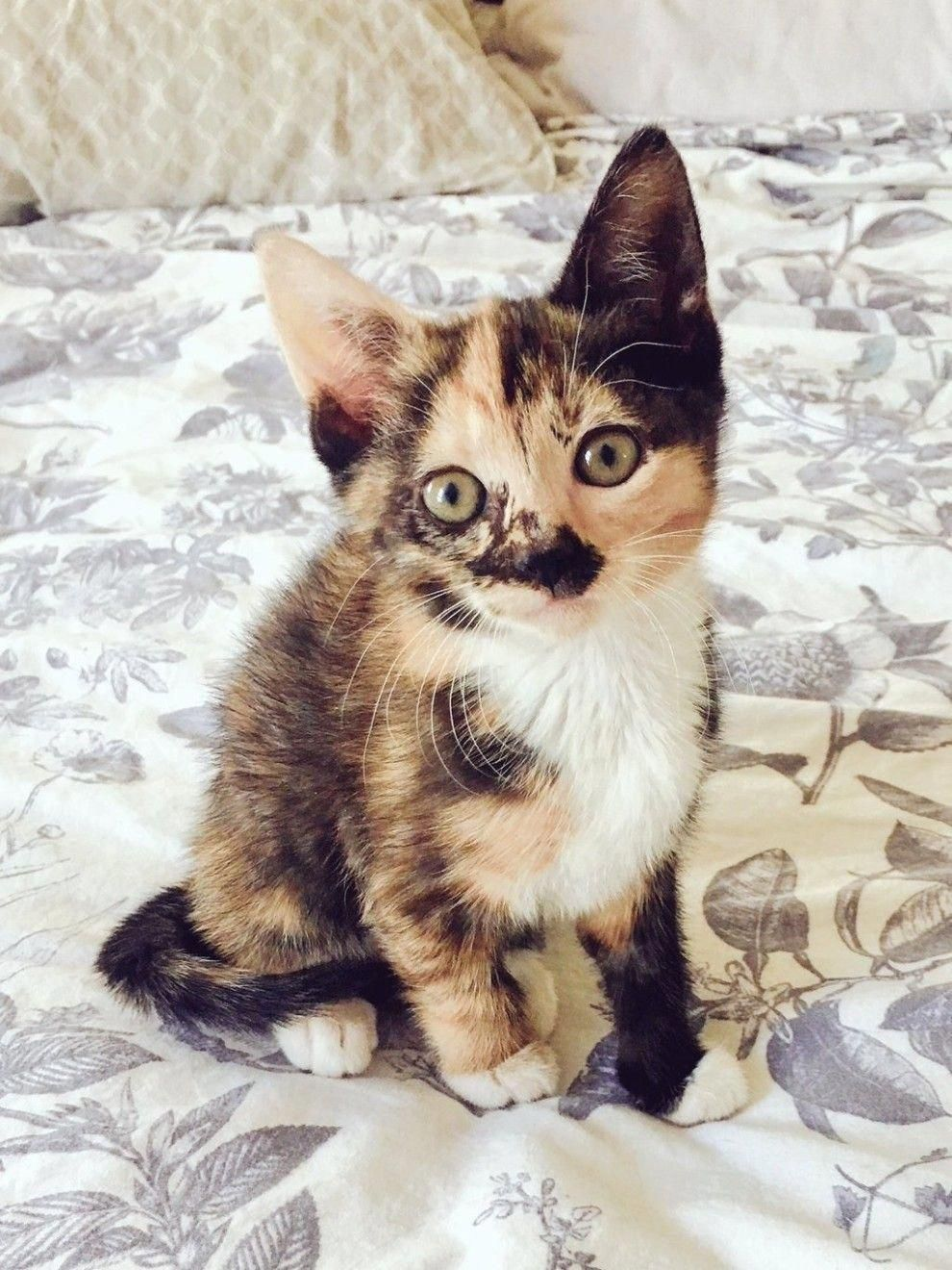28 Of The Most Ridiculously Cute Kittens Of 2016 Tap The Link Now All Things Cats Treat Yourself And Your Ca Kittens Cutest Pretty Cats Cute Baby Animals