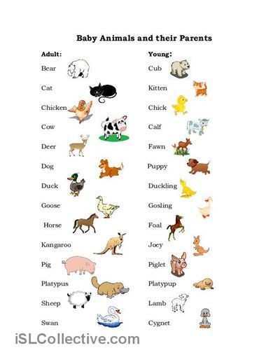 Images Of Names Of Animal Parents And Their Babies Two Pages One With A List Of Animals And Their Babies Wi Baby Animal Names Animal Worksheets Learn English
