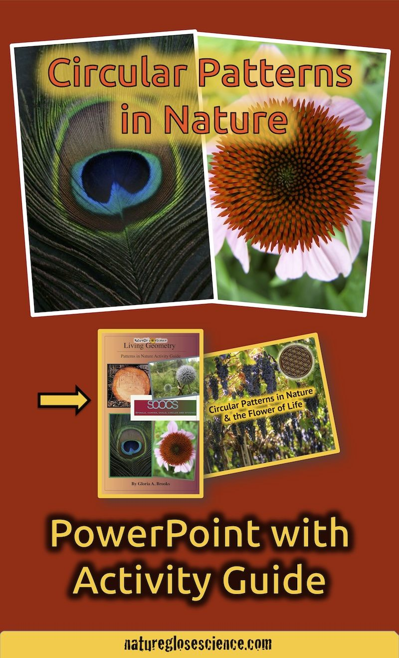 circular patterns in nature powerpoint activity guide primary grades maths in nature. Black Bedroom Furniture Sets. Home Design Ideas