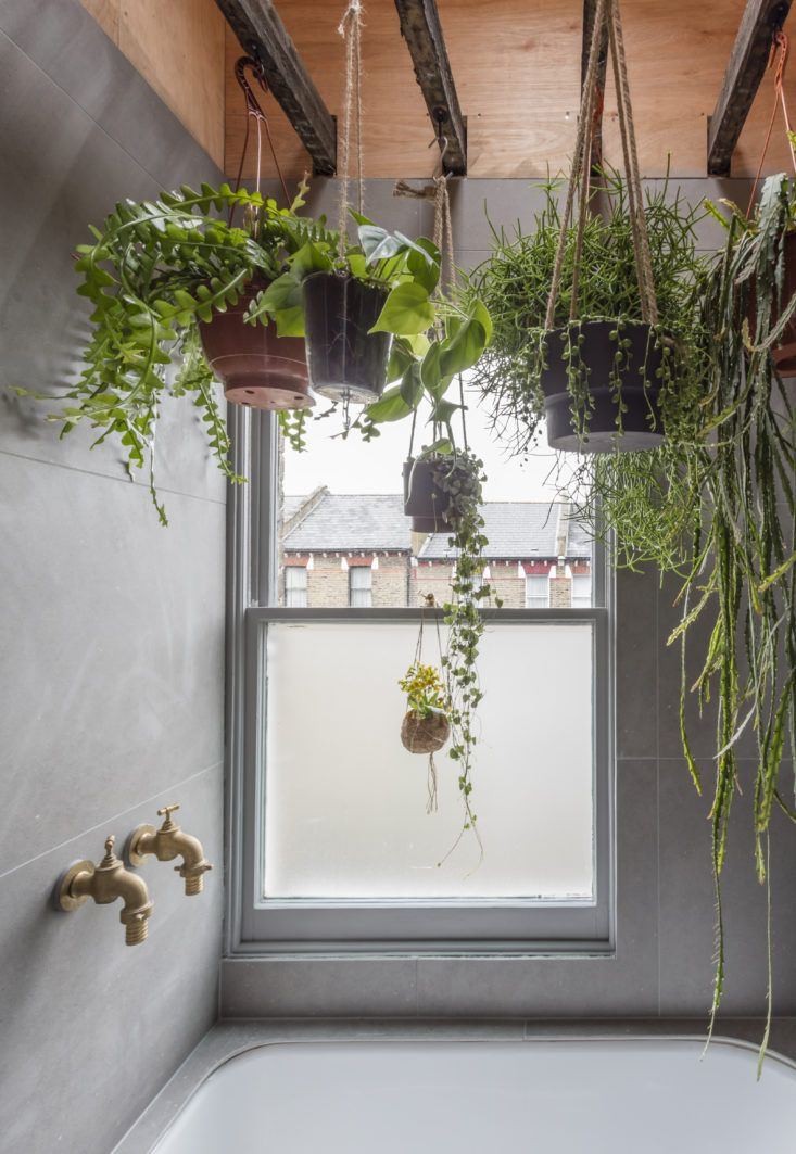Succulents And Other Hanging Plants In Architect Simon Astridge S Own London Bathroom Nicholas Worley Photo