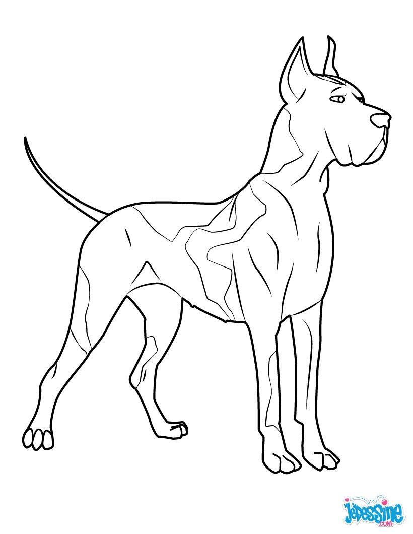Coloriage d un chien un beau dogue allemand id al pour - Dessin d un chien ...