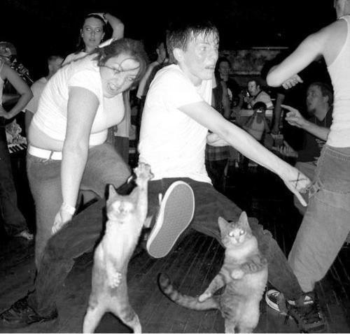 Dancing with kitties.