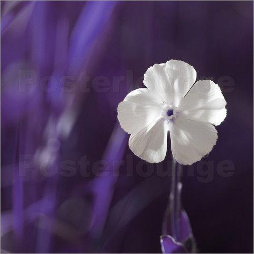 Blume weiß violett auf der Wiese - Tanja Riedel