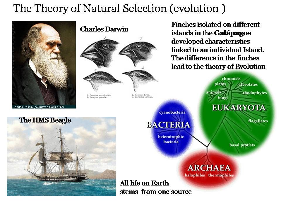 bbba8199299 #History #Oceanography #evolution Darwin went on a voyage of Discovery to  South America and the Galapagos Islands on a British sponsored ship called  the ...